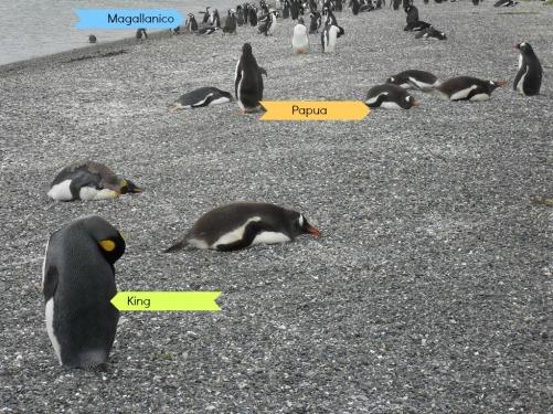 10_explorasp_pinguinera
